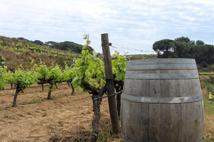 vinícola na região de Barcelona
