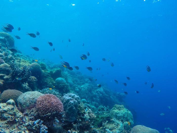 Bohol island in Philippines diving 8 .jpg