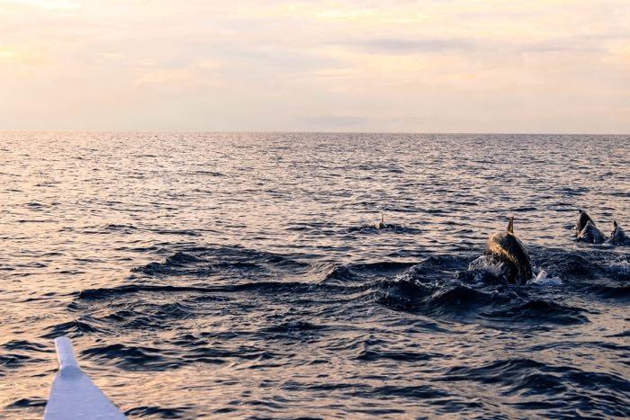 Bohol island in Philippines dolphin sunrise 7b.jpg