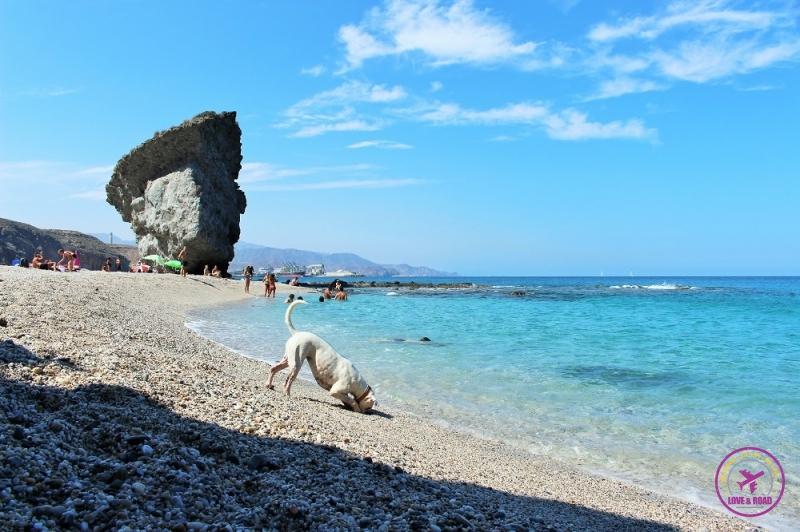 Cachorro na areia de praia do Cabo de Gata.