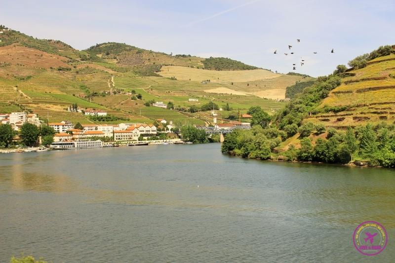 1 douro river birds
