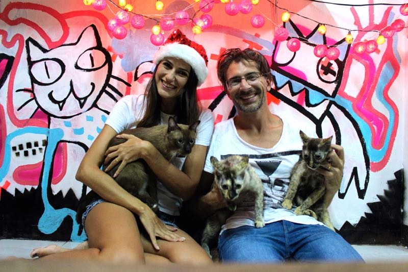 house sitting cats graffitti 7