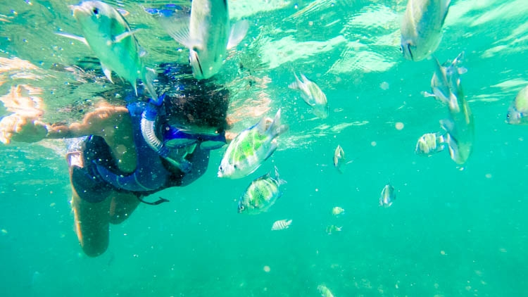 Swimming with colored fishes! Top Things to do in Langkawi, Malaysia. Enjoy the island by air, water & land! How to get there and where to stay in Langkawi, Malaysia.