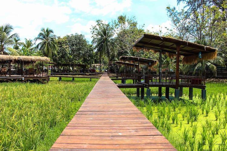 Langkawi Malaysia fields 12.jpg