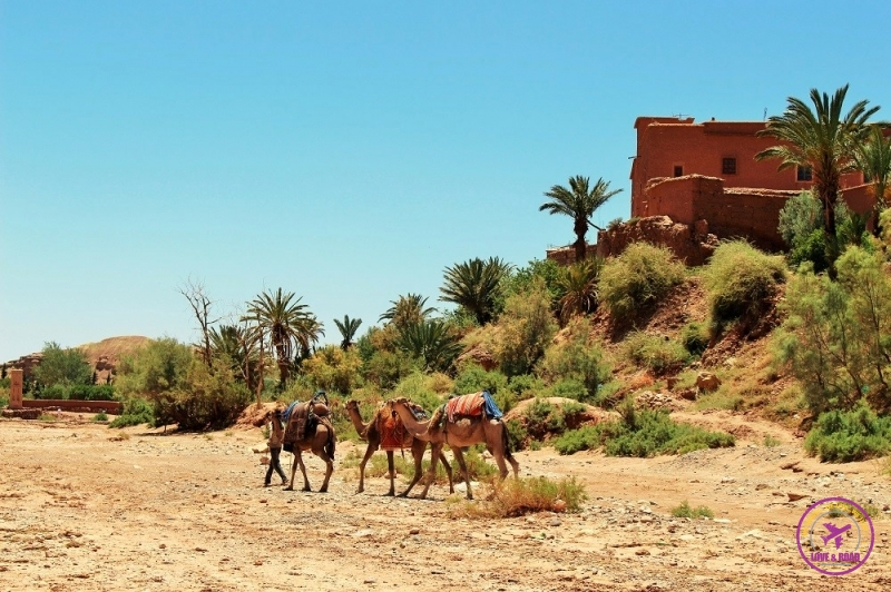 Moroccan tour 5