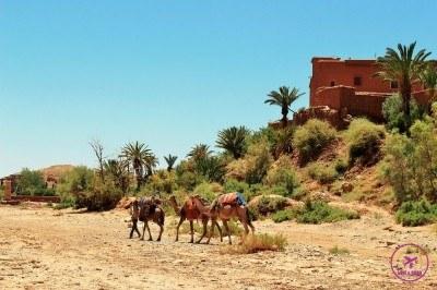Moroccan-tour-5