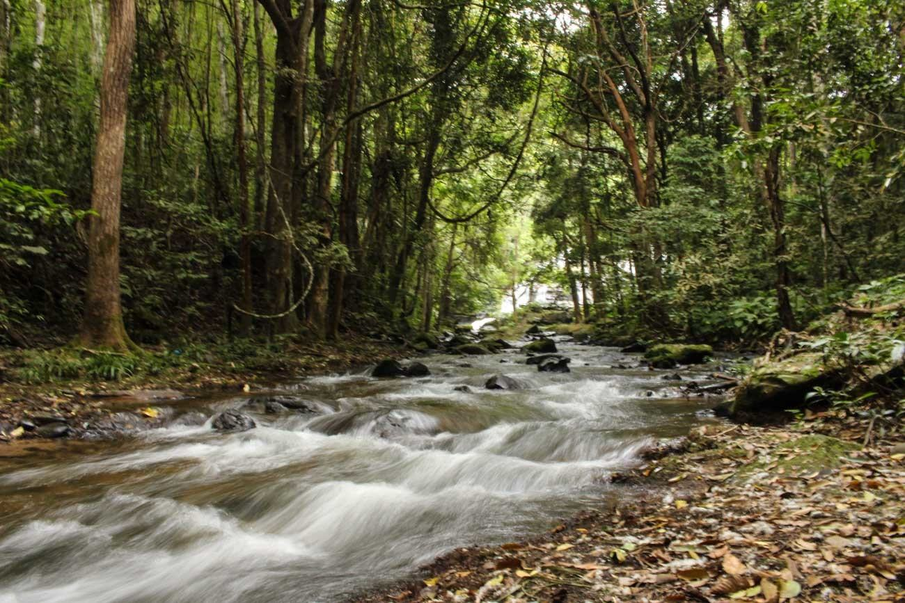 One of the things to do in Chiang Mai is to go on a guided tour through the forest.