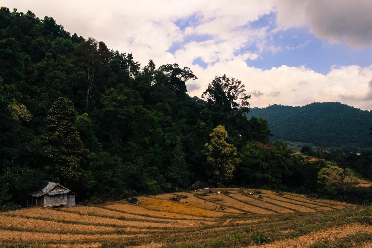 Things to do in Chiang Mai 7 rice fields