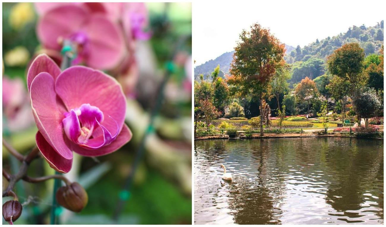 Visiting the Royal Project at Khun Klang Village is one of the things to do in Chiang Mai.