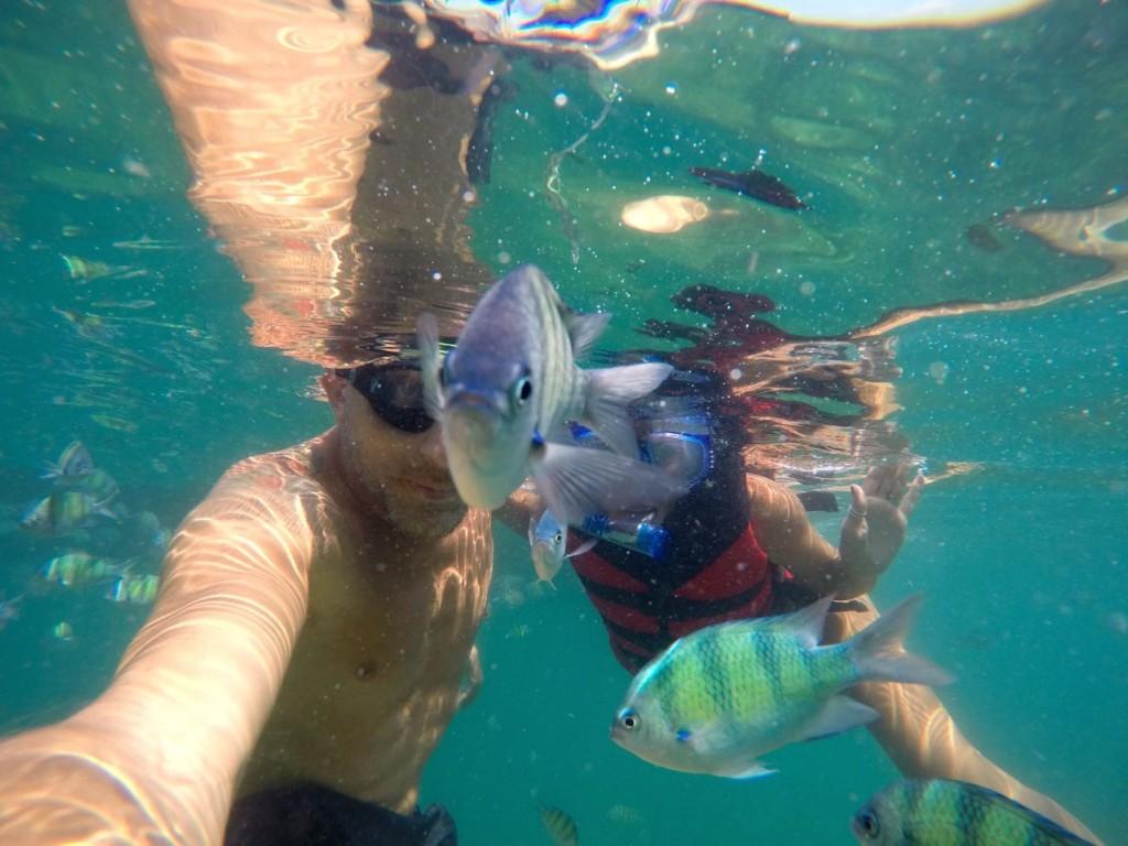 Nas ilhas da Tailândia até o peixe tira selfie!