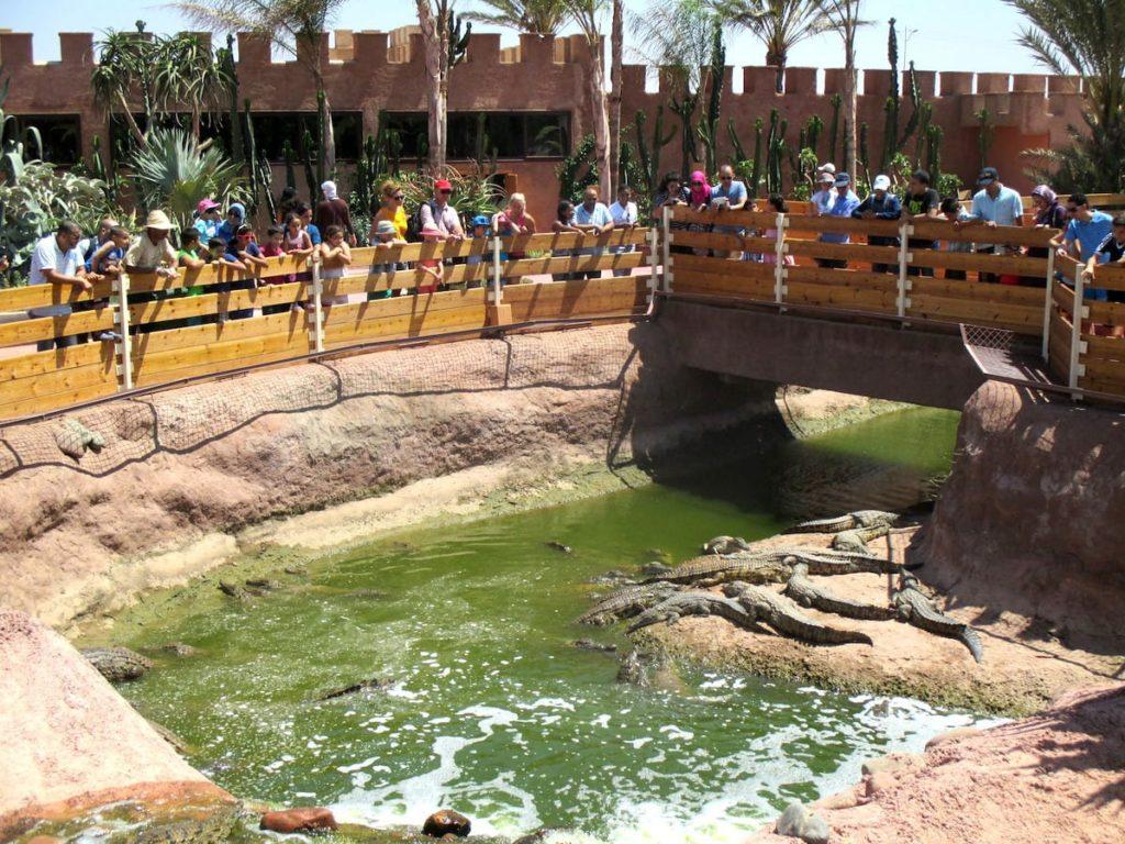 crocoparc-agadir-bassins-crocodiles-agadir-marocco