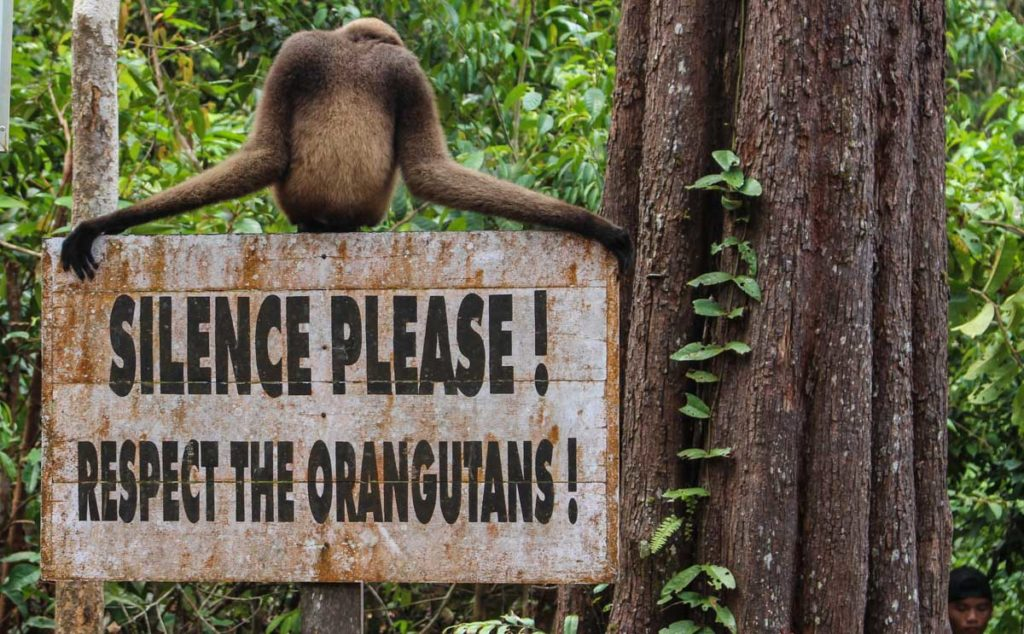To cruise and trek through the Tanjung Puting National Park you need to have a local and experienced guide and follow all the rules to respect the nature.