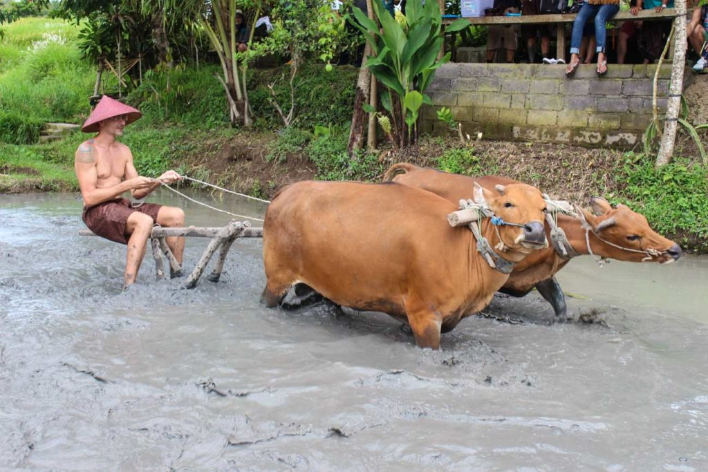 Help on the rice paddies is one of the unique experiences and things to do in Bali, Rob love it!