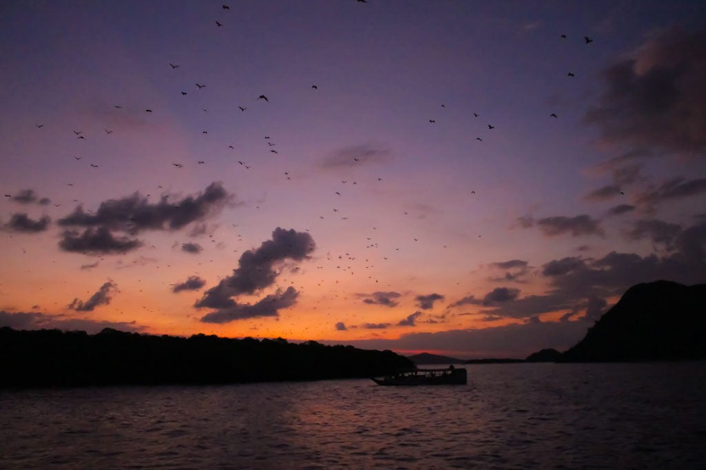 Na região da ilha de Komodo observamos os morcegos gigantes, uma experiência incrível.