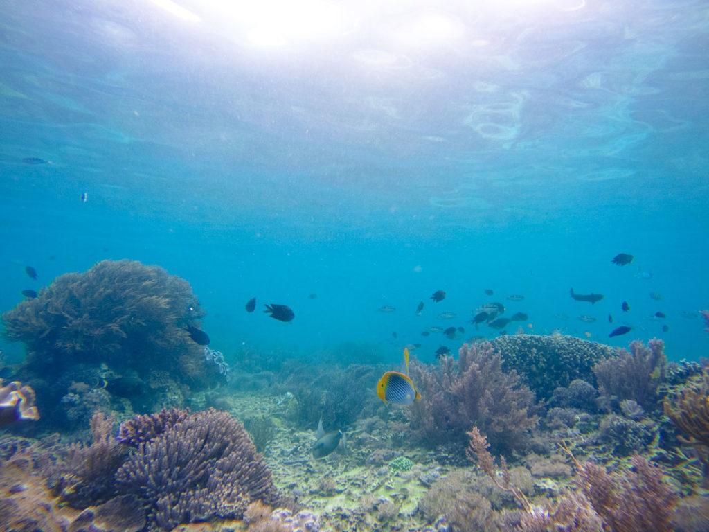 Snorkeling na ilha de Komodo, bem na frente da Pink beach.
