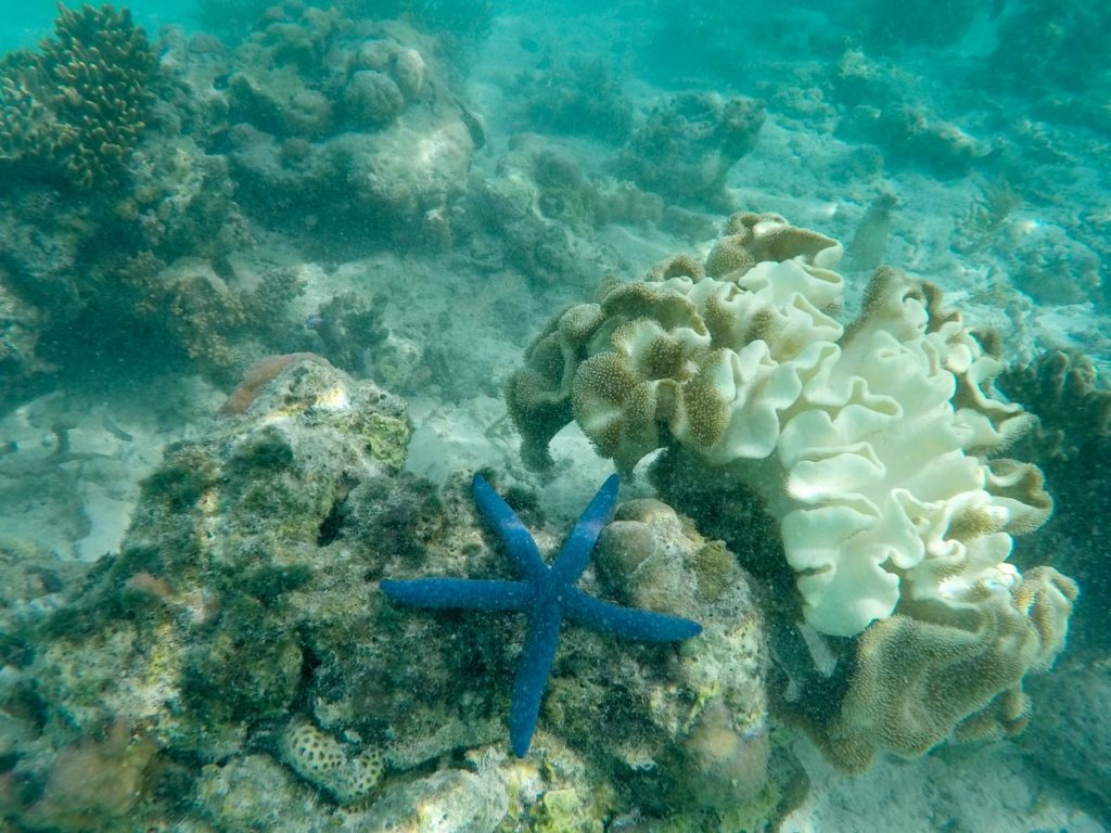 In Wakatobi Islands Marine Park there are over 750 species of fish and 850 known types of corals.