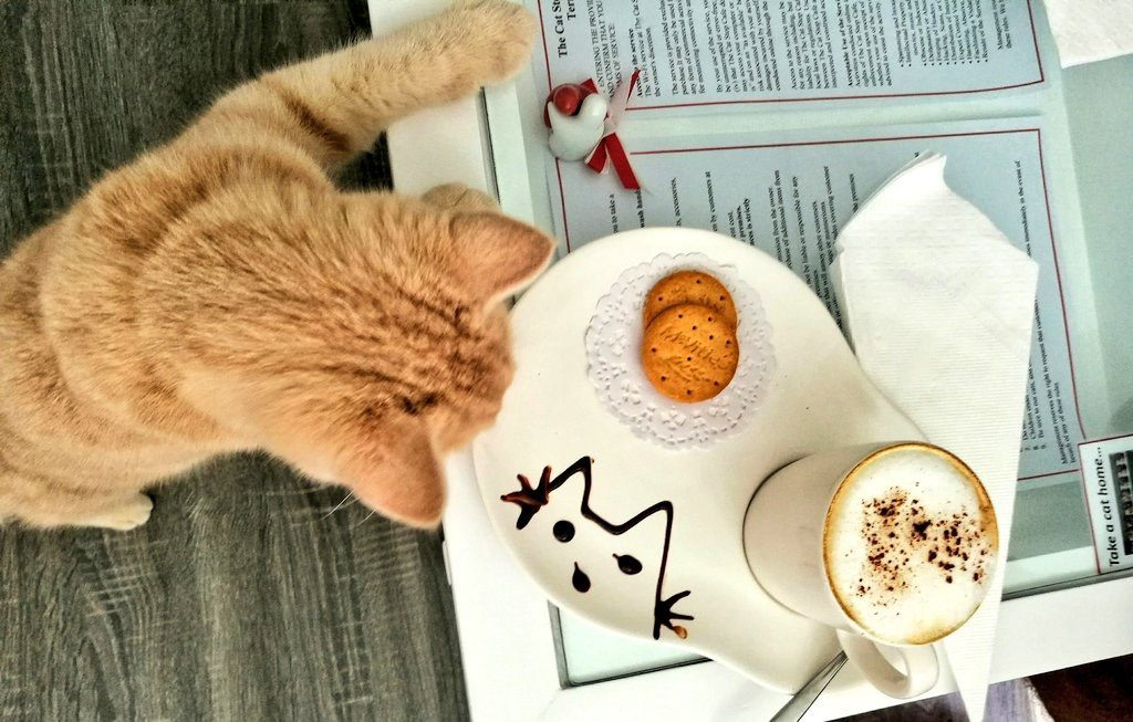 What to do in Chiang Mai if you love animals? Spend hours at a Cat Cafe!