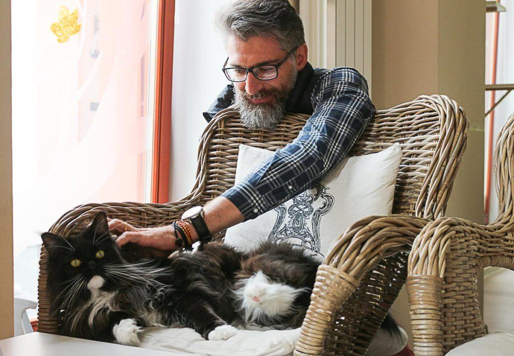 We are crazy about cats, so of course ou list of day trips from Ostrava would have a stop at a cat cafe.