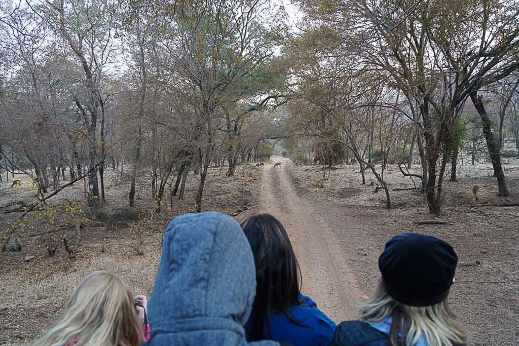 A cold adventure through the Ranthambore National Park for a Tiger Safari was one of the highlights of Palace on Wheels route in Rajasthan.