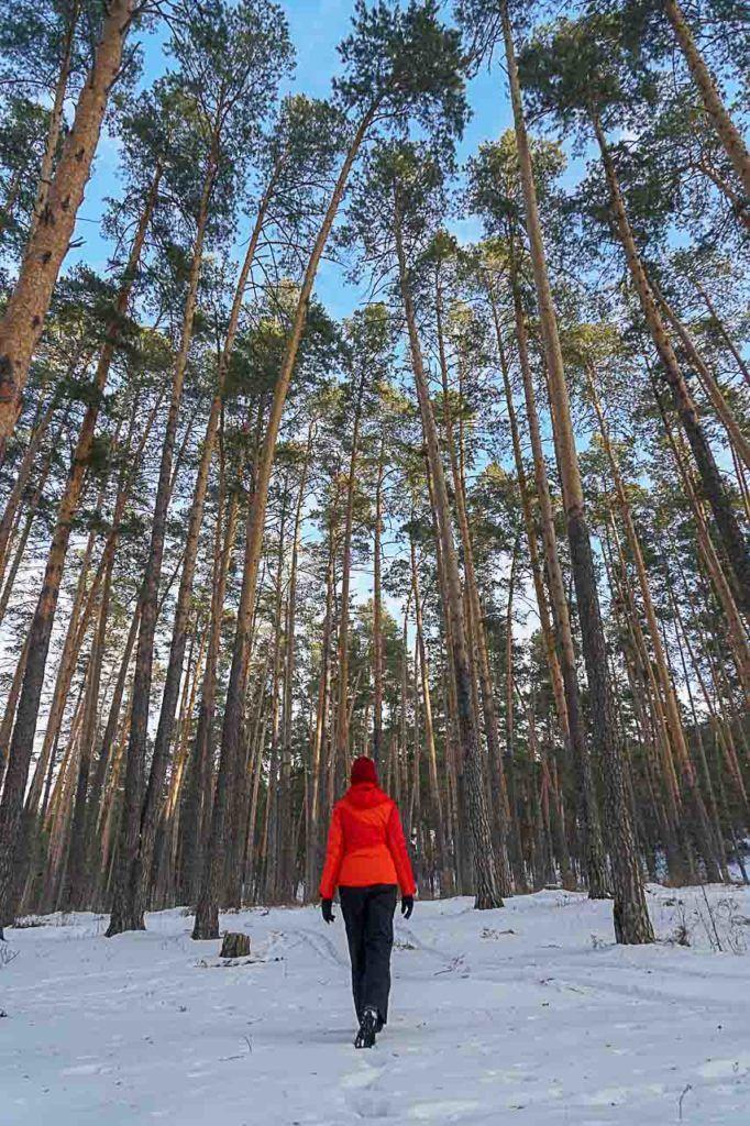 Você não verá ursos andando pela floresta, mas a beleza do lugar é indiscutível.