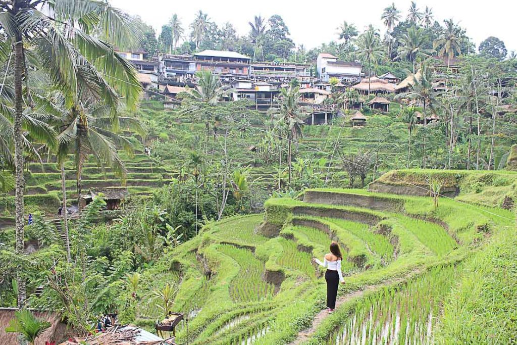 Arrive early in the morning at Tegalalang Rice Terraces to avoid the crowds and get the perfect shot.