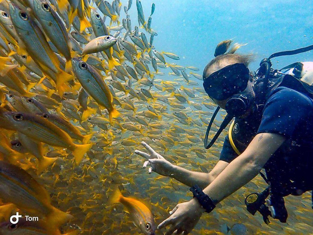 diving in Phi Phi Island Thailand