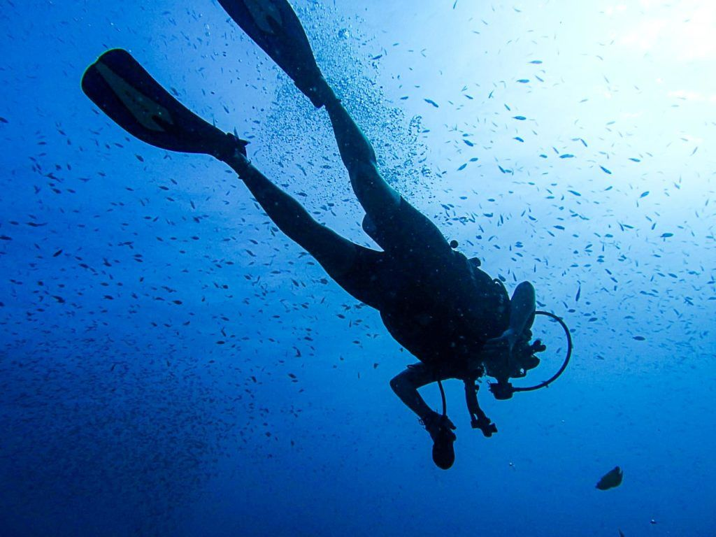 Surrounded by fish, a diver enjoy the sea at Koh Tao, Thailand.