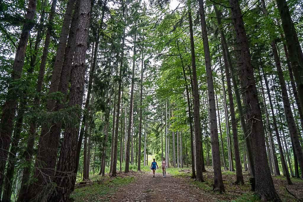 Fizemos trilhas em Graz, ou mais especificamente perto de Graz, e ficamos rodeados por grandes árvores em um caminho lindo.