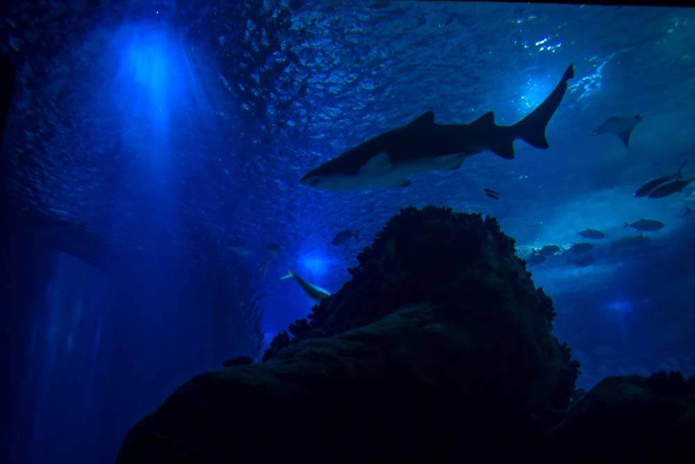 Find out Aquarium Lisbon price and the cost for other attractions in Portugal's capital.