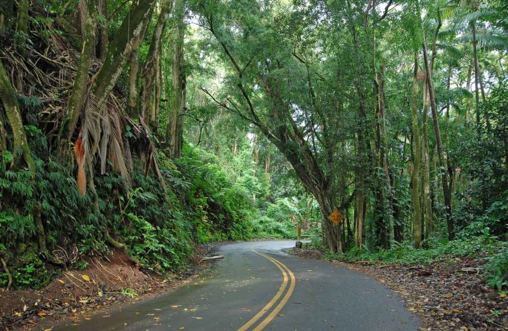 The Road to Hana is a 55-mile highway in the northeast of Maui Island and the Bamboo Forest is just one of the highlights.