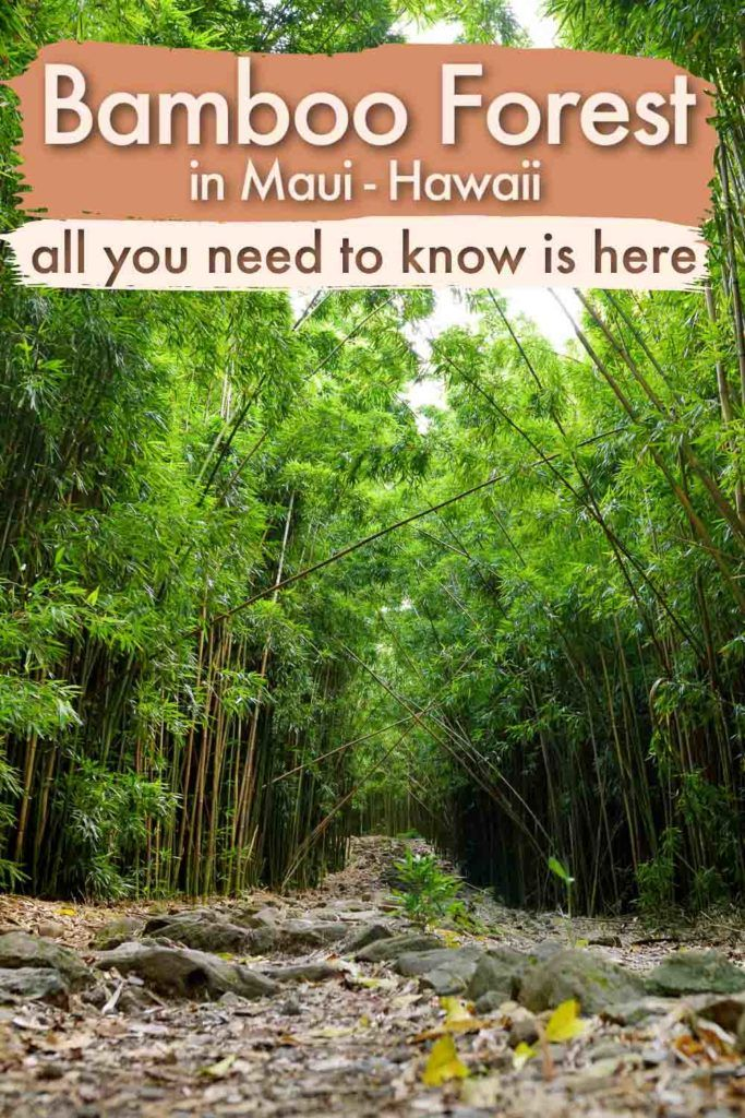 Everything you need to know to visit the Bamboo Forest in Maui, Hawaii, is here. We share tips to get to the Bamboo Forest, visit the Haleakala National Park and its waterfalls, plus information about the best hikes along the Road to Hana. You will also find in this guide info about where to stay and safety tips for enjoying this lush green paradise.