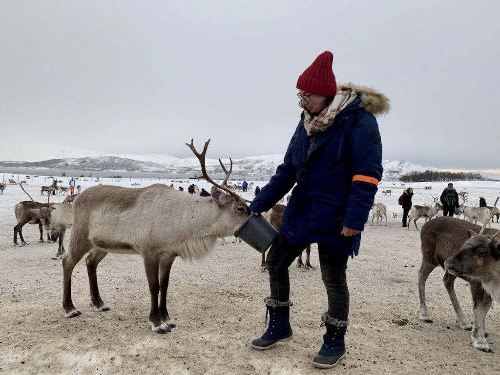 Woman feed a reindeer; this is a popular activity Tromso, even if you travel to Tromso on a budget.